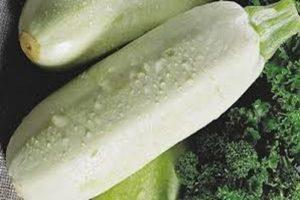 Descripción de la variedad de calabacín Rolik, características de cultivo y cuidado.