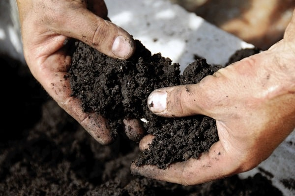 suelo para plantar