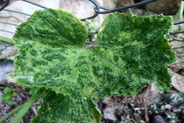 plantas marchitas