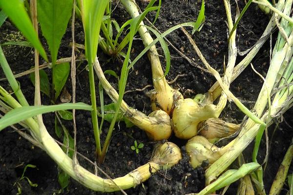 növények csoportja