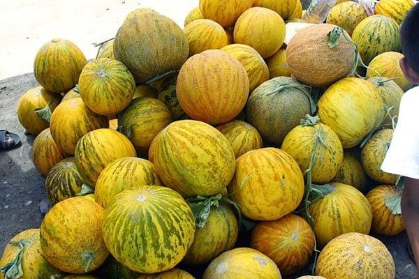 recoltă de pepene galben