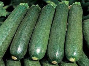 Descripción de la variedad de calabacín Tsukesha, características de cultivo y almacenamiento.