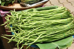 A Vigna babfajtának, a termesztési tulajdonságoknak és a hozamnak a leírása
