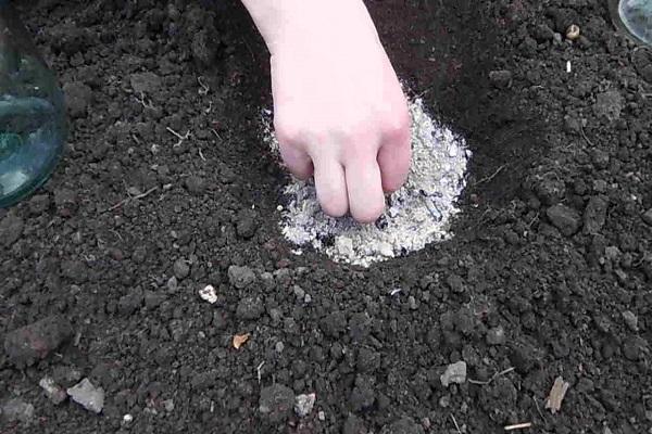 semințe intacte