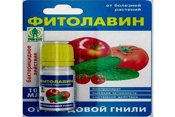 Solución de fitolavina