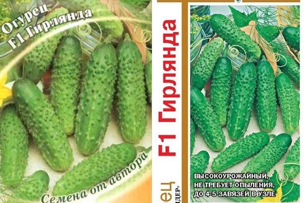 semená uhoriek Garland f1