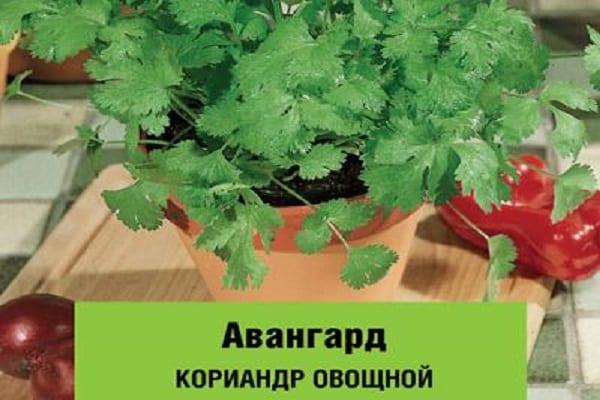 saláta zöldek