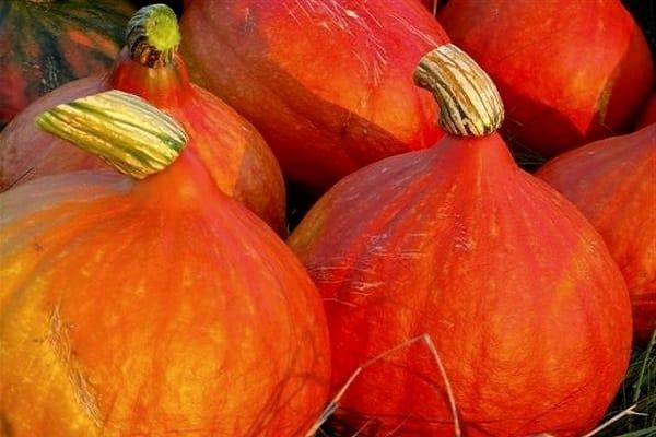 dovleac cu fructe mari