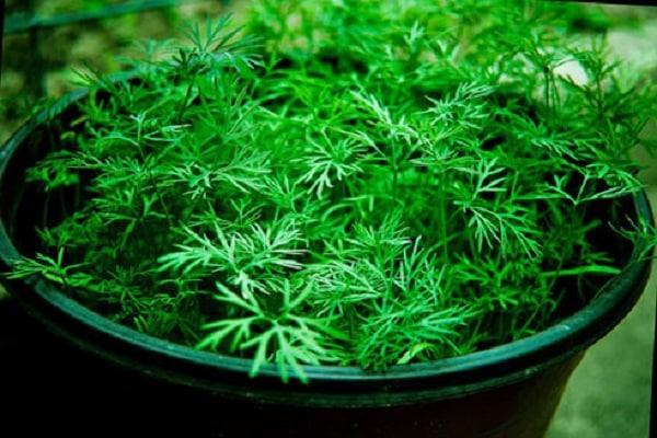 növények üvegházakhoz