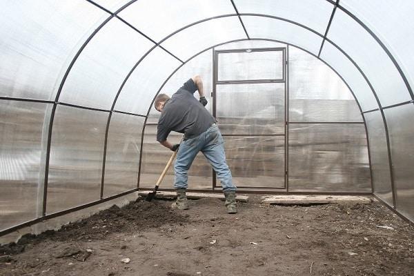 Hogyan lehet megfelelően növekedni és gondozni a kapros egy üvegházban télen