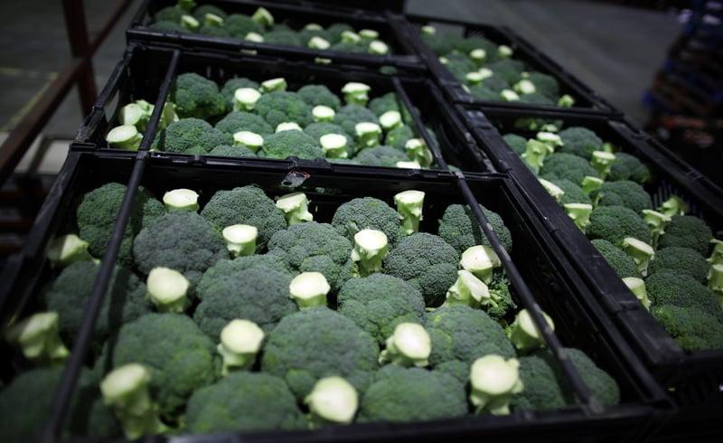 brokolica v škatuliach