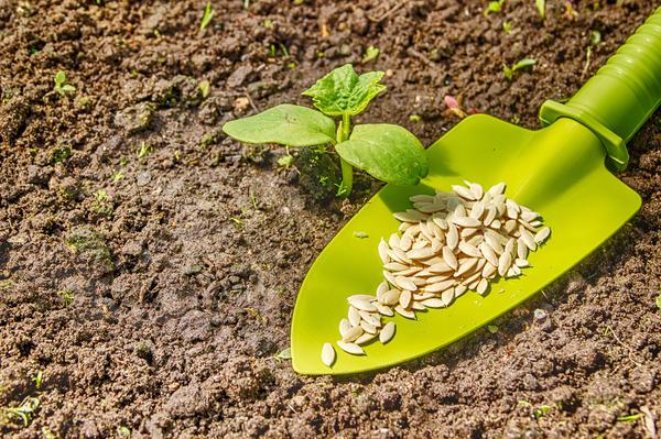 plantarea semințelor