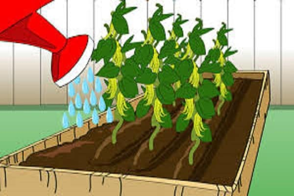 levél a növények