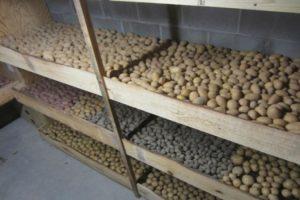 Cum și unde să depozitați corect cartofii acasă într-un apartament