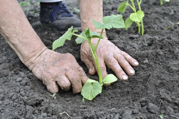 pôda sa zahreje