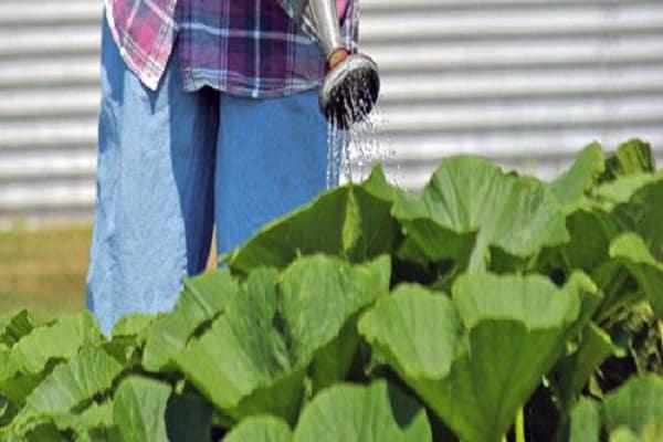 tolerează secetele