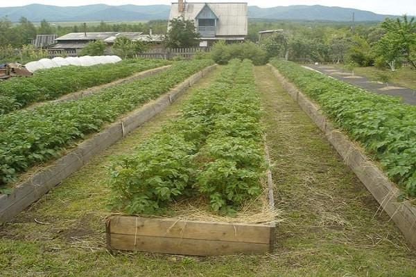 fermă organică