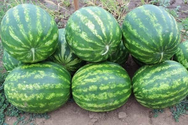 kristály görögdinnye