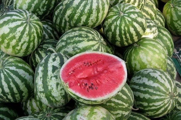 görögdinnye termelő belsejében
