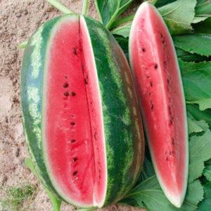 A Peking Joy görögdinnye fajtájának, fajtáinak és növekedési körülményeinek leírása és jellemzői