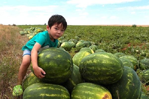 Astrahani görögdinnye