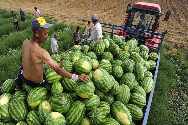 görögdinnye hidratálja