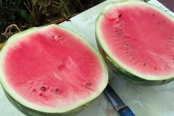 vágott görögdinnye termelő