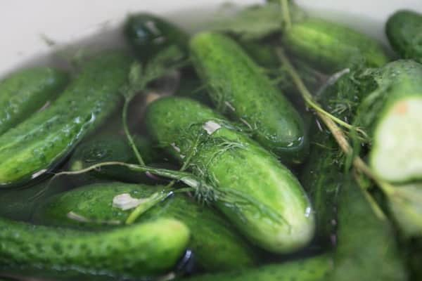 the process of cooking cucumbers