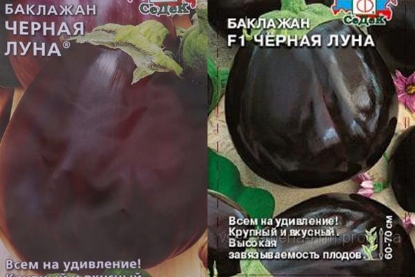 semillas de berenjena luna negra