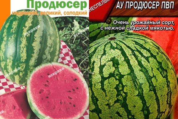 görögdinnye mag termelő