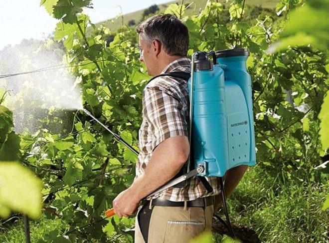 pulverizați strugurii cu substanțe chimice,
