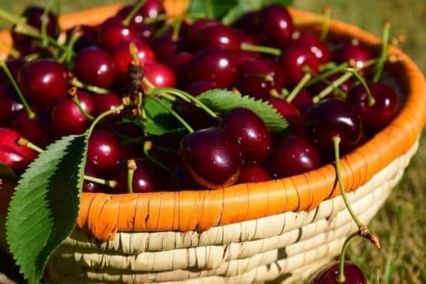 coș de fructe de pădure