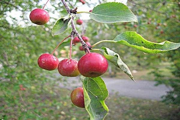 fructe pe copaci