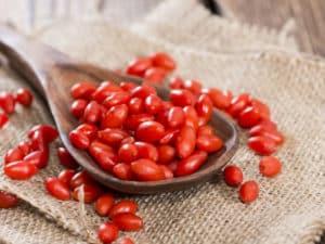 Propiedades útiles y contraindicaciones del agracejo, uso medicinal en la medicina tradicional.