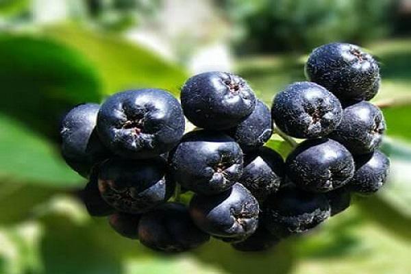 frutas no comestibles