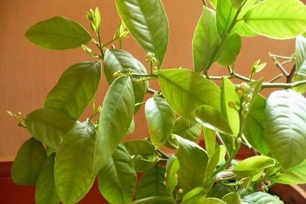 plántulas verdes