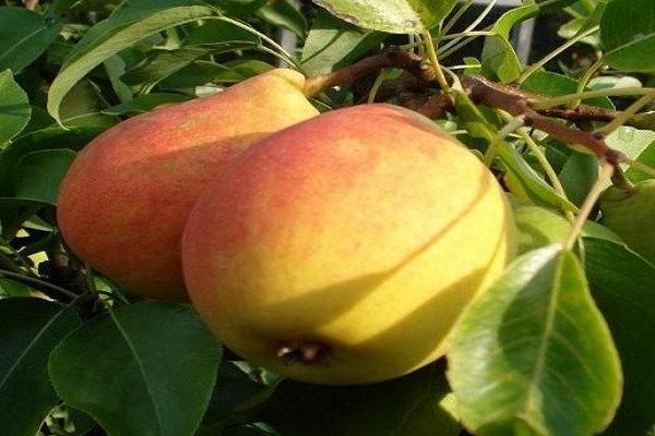 érett gyümölcsök