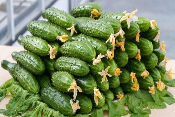 perete de legume