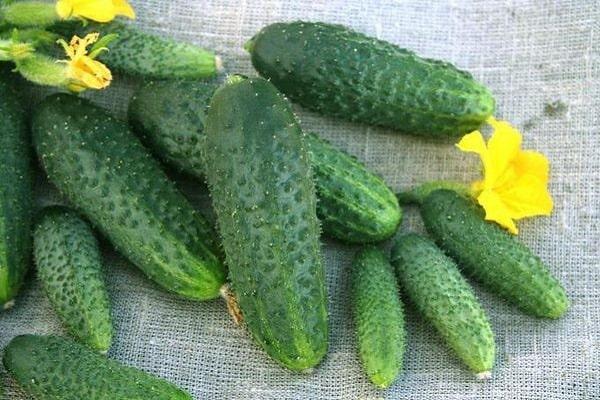 fructe vegetale