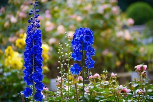 fioritura formata