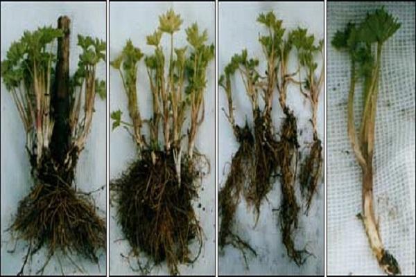 piante con radici