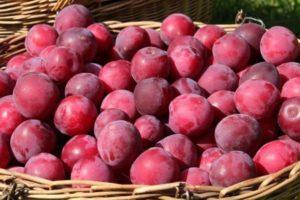 Descrierea soiului de prune de cireș Găsit, tehnologie de plantare, îngrijire și tăiere