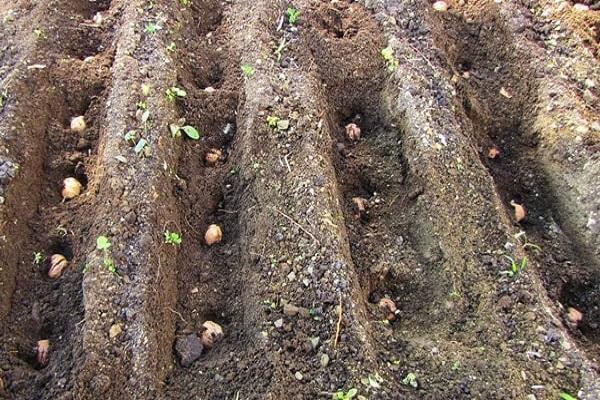 agujeros para plantar