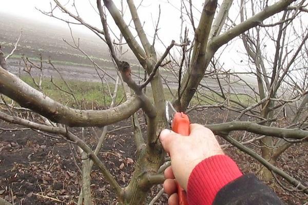 recortar madera