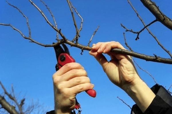 tăierea copacilor