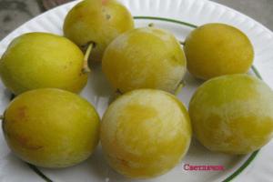Descrierea soiului de prune Firefly, date de plantare, cultivare și îngrijire