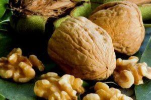 20 mejores variedades de nueces con descripción y características