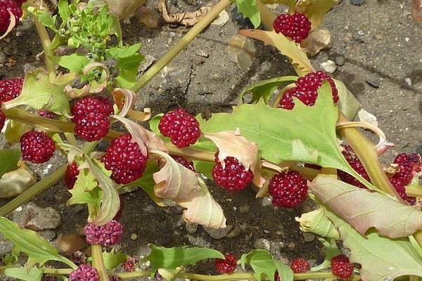 bajo el tipo de fresa