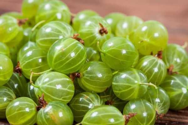 variedades de frutos verdes