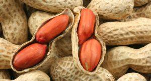Descripción de variedades y tipos de maní, propiedades útiles y nocivas, plantación y cuidado.